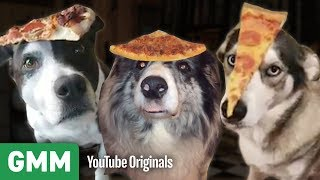 Download Dogs Balance Pizza On Their Heads | Teach Your Old Dog A New Trick Video