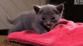 Download Kitten Afraid to Climb | Too Cute! Video