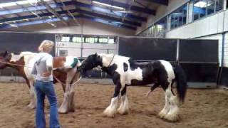 Download Dekking (stallion is for sale) Jessie door Celtic Sir Gwynfor Tinkers. Video