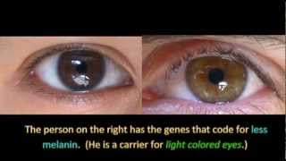 Download Genetics and Eye Color Video