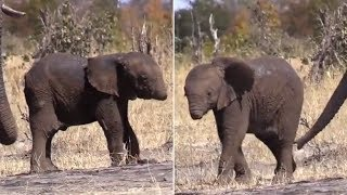 Download This Baby Elephant Tragically Lost Its Trunk, And Experts Are Fearful About Whether It Can Surviv Video
