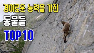 Download 경이로운 능력을 가진 동물들 10 Video