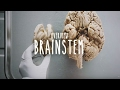 Download Overview of the Brainstem - UBC Flexible Learning Video