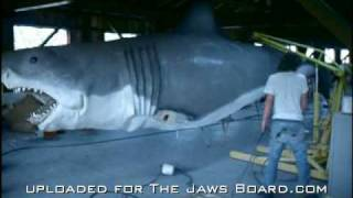 Download JAWS - The Taylor Footage Video