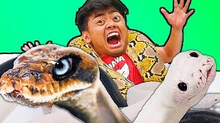 Download Giant Snake Hot Tub Bath Challenge! Video
