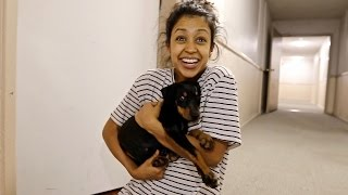 Download SURPRISING GIRLFRIEND WITH A PUPPY!! Video