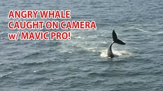 Download CRAZY ANGRY WHALE CAUGHT ON CAMERA w/ MAVIC PRO! Video