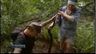 Download La foresta dei serpenti - Australia Video