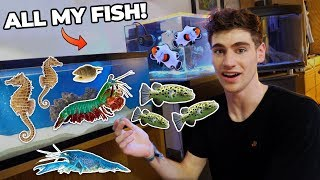 Download ALL MY FISH & RARE EXOTIC ANIMALS!!! (dorm room tour) Video