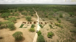 Download safariLIVE - Sunrise Safari - Nov. 02, 2017 Video