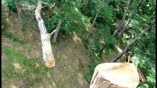 Download Dead Oak Friday Video
