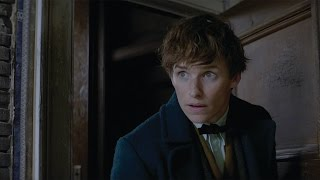 Download Fantastic Beasts and Where to Find Them - IMAX Fan Event Featurette [HD] Video