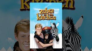 Download Zebra In The Kitchen Video