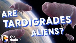 Download Are Tardigrades Aliens? | The Dodo Video
