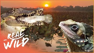 Download The Wonders Of The Billabong! | Wild Things Documentary Video