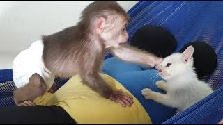 Download Baby Monkey | Doo's Playtime With Funny Cat Miu Video
