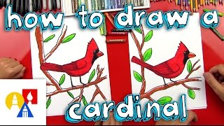 Download How To Draw A Cardinal Video