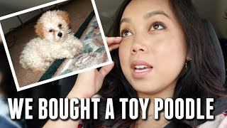 Download The time we bought a toy Poodle - itsjudyslife Video
