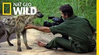 Download Inside the Hyena Feast | Nat Geo Wild Video