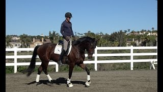 Download DEVELOPING THE SECOND TROT (with Fin and Joseph) Video