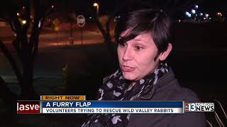 Download State, animal advocates at odds over feral rabbits problem Video