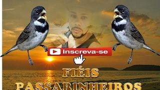 Download GRUPO FIEIS PASSARINHEIROS DE VOLTA ASSISTA O VIDEO E VEJA AS REGRAS Video