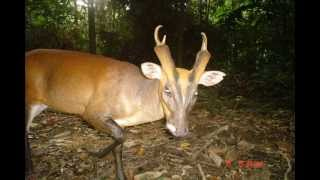Download WWF-Malaysia Camera Trap Photos from Wildlife Monitoring Unit (WMU) Video