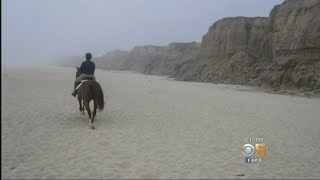 Download Horse Poop A Smelly Problem For Some Beachgoers At Half Moon Bay Beach Video