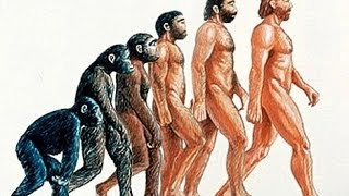 Download Evolution The Evolution of humans documentary 2014 Video