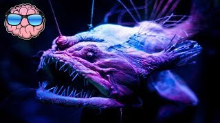 Download Top 10 CREEPY Deep Sea Creatures You Didn't Know Existed! Video