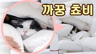 Download 까꿍쵸비! 이불 속 고양이는 위험합니다 feat. 쵸꼬비 부스레기시절 사진 Video