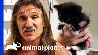 Download 3 Week Old Kittens Rushed To The Clinic For Emergency Care   Dr. Jeff: Rocky Mountain Vet Video