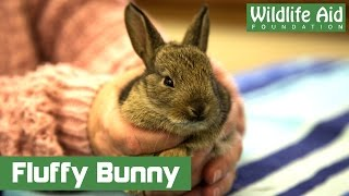 Download Fluffy baby rabbit goes to hospital Video