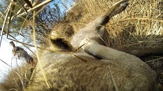 Download GoPro: Lioness Hunts Down a Buck with Kevin Richardson Video