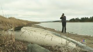 Download Third dolphin found dead within four days on shore in N.S. Video