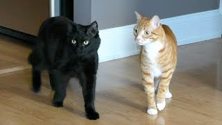 Download Moving with Cats - Funny Compilation! Video