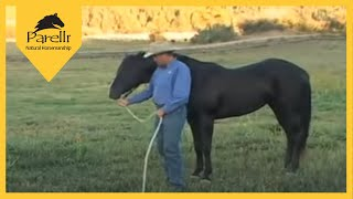 Download Parelli Natural Horse Training Tip - Pat Parelli shows how to lead a horse Video