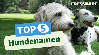 Download Top 5 Hundenamen Video