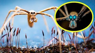Download THE RAREST SPIDERS In The World Video
