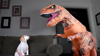 Download T-Rex Befriends Dog: Funny Dog Maymo Video