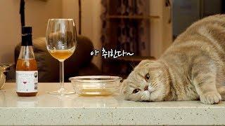 Download 취한다 취해 고양이전용 와인마시기 Video
