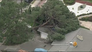 Download Tree Falls On Garage, Another Tree At Risk Of Crushing 2nd House In Pasadena Video