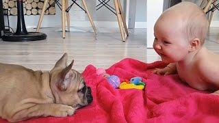 Download Los bebés lindo que juega con divertido Bulldogs Compilación 2016 - NUEVOS VIDEOS Video