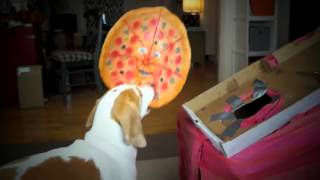 Download Dogs vs. Talking Pizza Prank: Funny Dogs Maymo & Penny Video