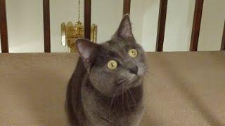 Download Kitten Close Up 2017-10-17 Video