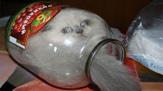 Download Verdikleri Karardan Pişman Olan 17 Sevimli Kedi Video