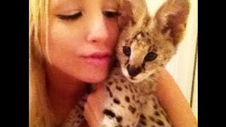 Download Baby Serval Sounds Video