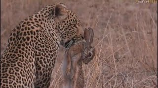 Download Pt 2 Safari Live's Sunset Safari Drive at 5:00 PM on Sept 12, 2017 ( Hosana ) Video