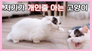 Download 자기가 개인줄 아는 고양이 Video