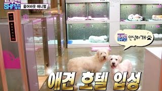 Download 강아지 호텔, 애견 스파 가보셨나요 ? Have you ever been to the pet hotel and pet spa? Video